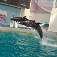 """Conjuncția """"dacă"""" sau pledoarie pentru delfini"""