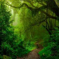 Pădurea — MasticadoresRumanía